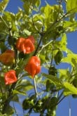 From Peppers to Hardwoods—Farming in the Yucatán