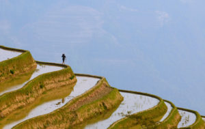 Visiting the Rice Terraces of China's Yunnan Province