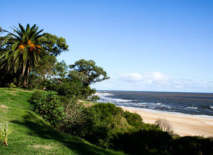 Uruguay beachside with lush vegetation, bright sand, gentle waves