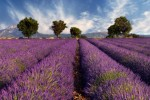 """""""My Home in Provence Pays for Itself"""""""