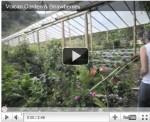 Video: Strawberries and Cream in Panama's Chiriqui Province