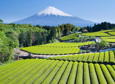 Japan tourist attraction