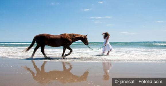 horses-beach