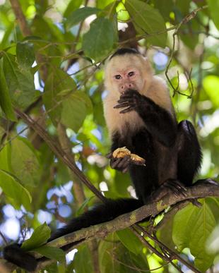 Living in Manuel Antonio, Costa Rica