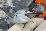 Caribbean and Pacific Coast Fishing in Costa Rica