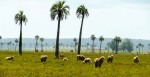 uruguay-farming