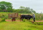 Paraguay-5-Ox-cart-Santa-Maria-de-Fe-Paraguay-(3)