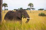 Page-3-Elephant