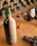 Invest in a vineyard in Argentina