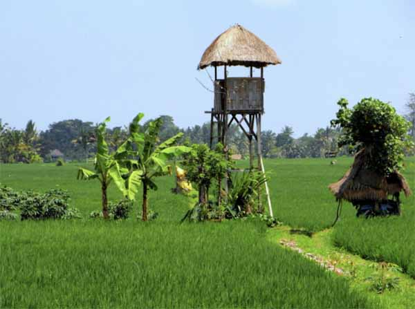 outskirts of ubud bali
