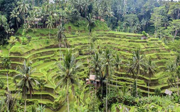 terraces in ubud bali
