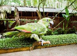 Bird watching, Costa Rica