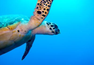 Belize – Best For Diving