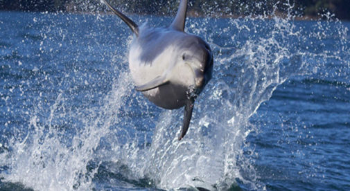 Get Paid to Play With Dolphins