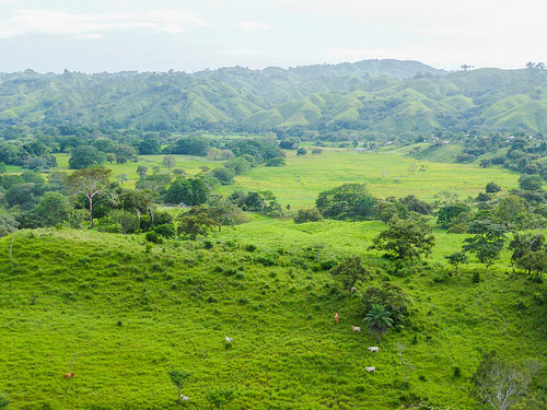 Pedasi is also home to lush greenery which Panama is so famous for.