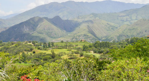 vilca-ecuador