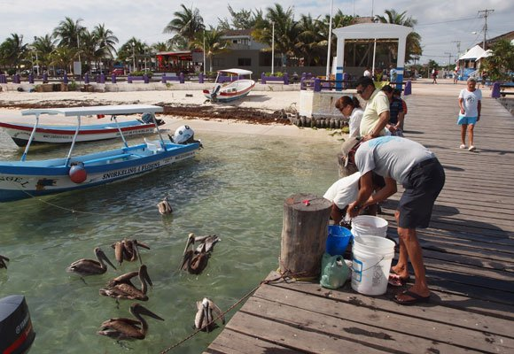 Fishermen still head out every day and you can buy their catch at the local cooperative. Check out these pelicans waiting for scraps.