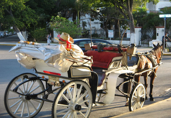 A carriage driver waits for his next fare on the grand boulevard known as Paseo de Montejo.