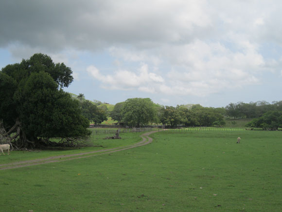 The Guanacaste province, which includes the northern Pacific coast, is cattle country, with vast pastures.