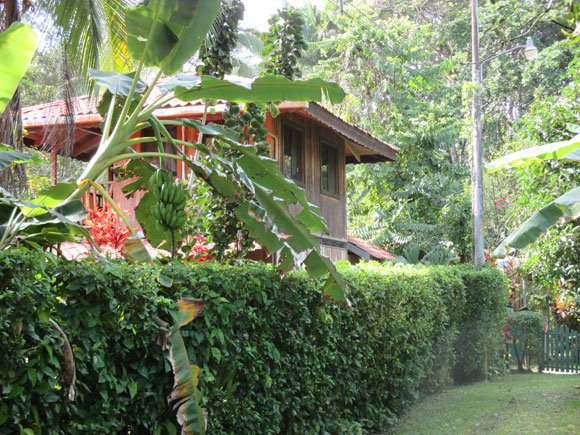On the Caribbean coast, homes are set in the jungle. The long-dormant cacao (the key ingredient in chocolate) industry is coming back with new farms being planted.