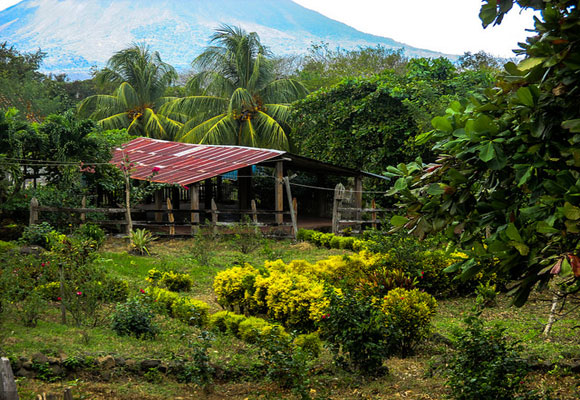 Farming is mainstay of Ometepe's economy. And the rich volcanic soil makes for ideal growing conditions.