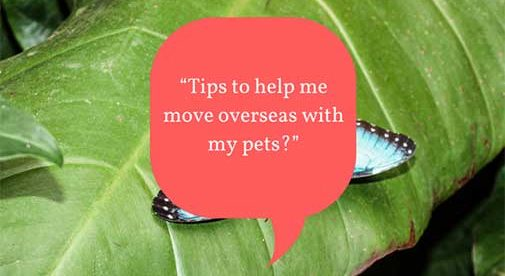 """Tips to help me move overseas with my pets?"""