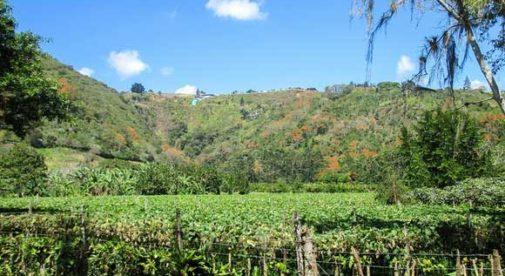 Orosi Valley, Cosa Rica