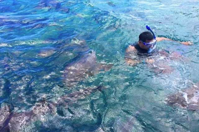 snorkling in ambergris caye