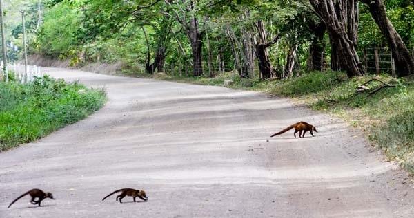 Costa Rica road Tamarindo